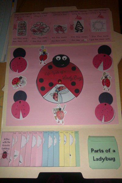 ladybug1a.jpg